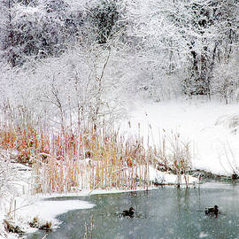 Snow and Ducks by Jerry Griffin