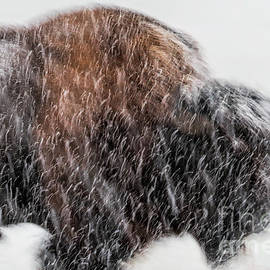 Snow Beast by Jim Garrison