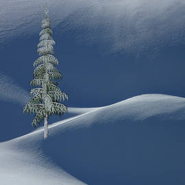 Snow Covered Tree And Mountains Color by David Dehner