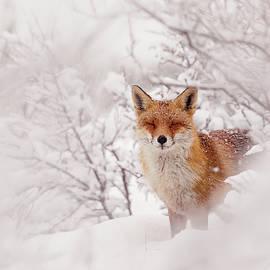 Roeselien Raimond - Snow Fox Series - A Fairytale Fox in a Dreamscape