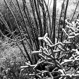 Snow in Tucson BW by Bonnie See
