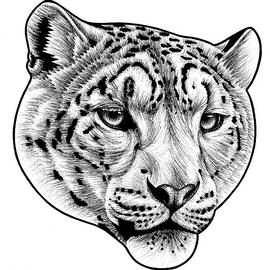 Snow leopard - ink illustration by Loren Dowding