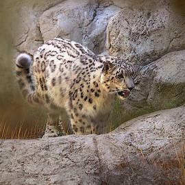 Snow Leopard Play by Terry Davis