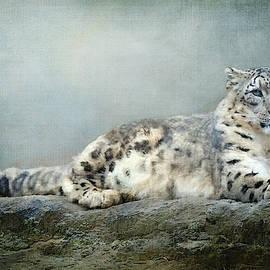 Snow Leopard Textured by Terry Davis