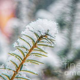 Snow Needle by Jim Lepard