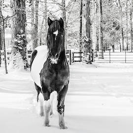 Snow Painted Pony by Donna Twiford
