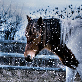 Natalie Holland - Snow Pony