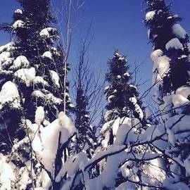 Judy Dimentberg - Snow topped trees in Winter