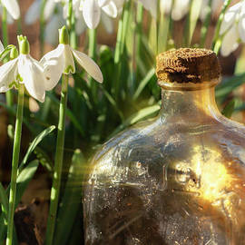 Snowdrop flowers and old glass jar with sunlight by Simon Bratt Photography LRPS