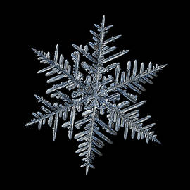 Snowflake 2016-01-21 - 1 Black by Alexey Kljatov
