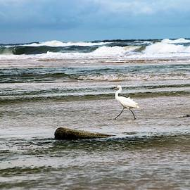 Snowy Egret Braving the Surf by Mary Ann Artz