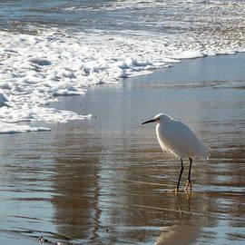 Snowy Egret on a California Beach by Mary Lee Dereske