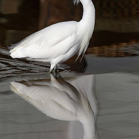 Bruce Frye - Snowy Egret Reflected 01-04