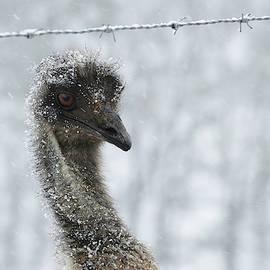 Stamp City - Snowy Emu