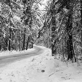 Betty Denise - Snowy Forest Road in Winter