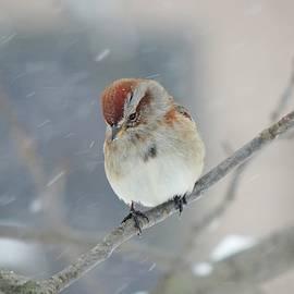 Snowy Perch by Carmen Macuga