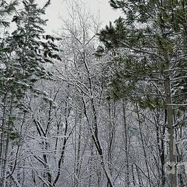 Snowy Sentinels by Cheryle Gannaway