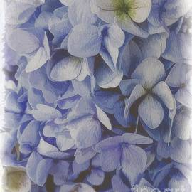 Soft and Gentle Hydrangea by Luther Fine Art