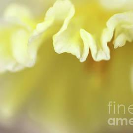 Soft As Butter by Karen Adams