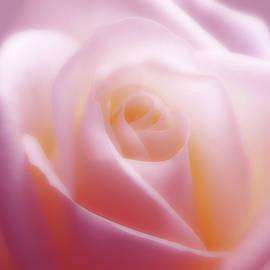 Soft Beauty by Johanna Hurmerinta