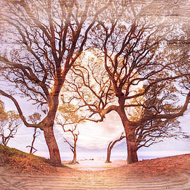 Soft Moondance by Debra and Dave Vanderlaan
