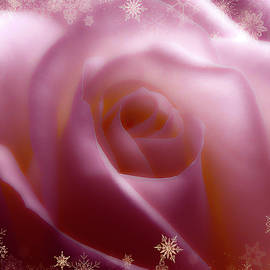 Soft Pink Rose And Gold Snow by Johanna Hurmerinta