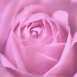 Soft And Beautiful Rose Macro Photograph by Johanna Hurmerinta
