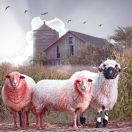 Soft Summer Sheep by Debra and Dave Vanderlaan