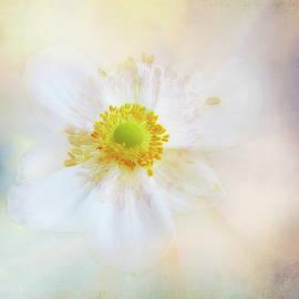 Soft Textured Anemone by Terry Davis