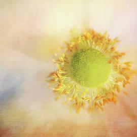 Soft Whisper Flower by Terry Davis