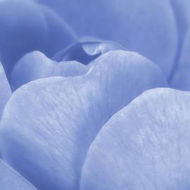 Soft Whisper Of A Blue Rose by Johanna Hurmerinta