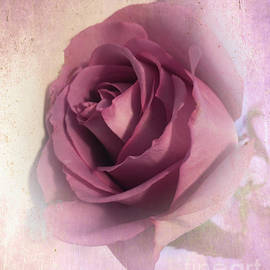 Softly Muted Rose by Luther Fine Art
