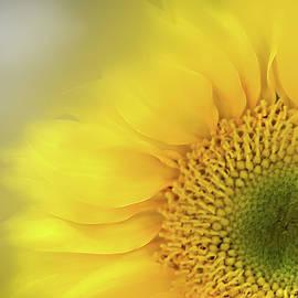 Softly Sunflower  by Terry Davis