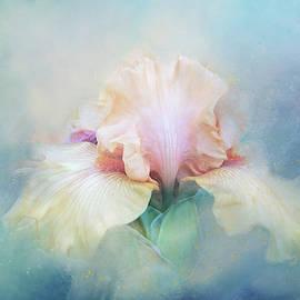 Softly Textured Iris by Terry Davis