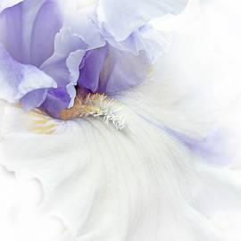 Softness of a Lavender Iris Flower by Jennie Marie Schell
