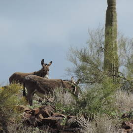 Sonoran Desert Dwellers by Bill Tomsa
