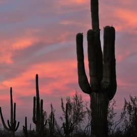 Sonoran Sunset by Bill Tomsa