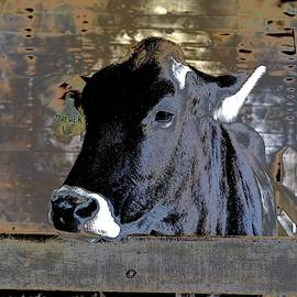 Soul And Solitude Of A Cow by Alida M Haslett