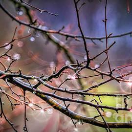 Sparkling Raindrops by Janice Pariza