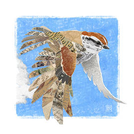 Sparrow by Clint Hansen