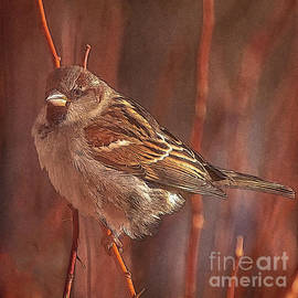 Sparrow in the Sunshine by Janice Pariza