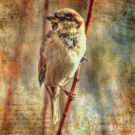 Sparrow Series 11 by Janice Pariza