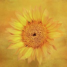 Spectacular Sunflower by Terry Davis
