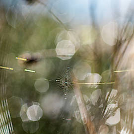 Spiderwerks by Robert Potts