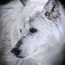 Spirit Of The Wild by Karen Wiles