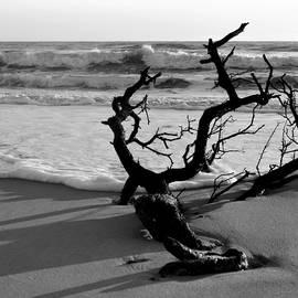 Pristine Seascape by Dianne Cowen