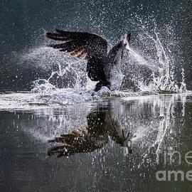 Splash Down by Joseph Ciferno Jr