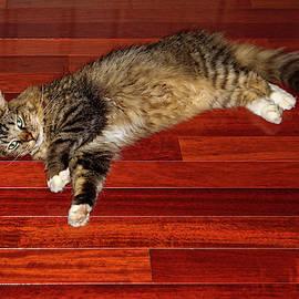 Sprawled Kitty by Sally Weigand