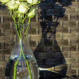Spray Roses in the Shadows by Stephanie Hanson