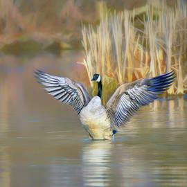 Spread Your Wings - Canada Goose by Nikolyn McDonald